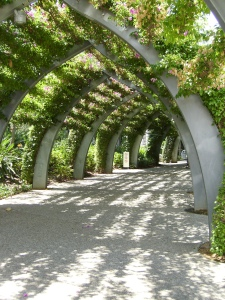 Bougainvillea archway, Southbank