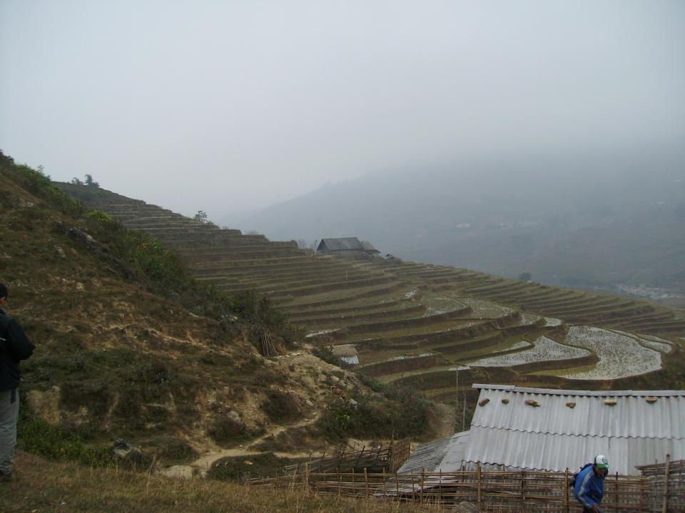 terraced rice paddies near Sapa