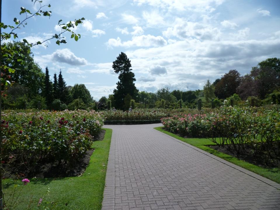 formal rose garden